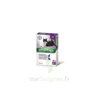 Advantage 80 Solution Application Locale Lapin-chat Moins 4kg 4 Pipettes/0,4ml à Lherm